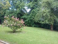 Shrub in Weston Super Mare's park
