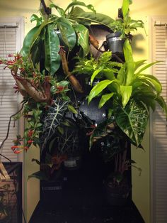My panther chameleons humble abode. I call it the cage-less cage. Enjoy.