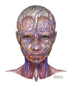Anatomy Girl (in progress) - Kevin Cease
