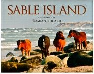 Love the Sable Island Horse Photography