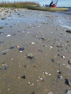 How to Find Shark Teeth : 10 Steps (with Pictures) Florida Travel, Florida Beaches, Shark Teeth Crafts, Venice Beach Florida, Fossil Hunting, Folly Beach, Travel Activities, Ocean Beach, Beach Trip