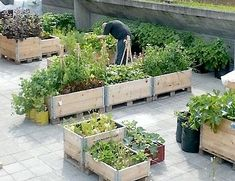 26 Great ideas for a vegetable garden in DIY wooden beds Raised Garden Beds, Raised Beds, Herb Garden, Home And Garden, Vegetable Bed, Lush Lawn, Chinese Garden, Natural Scenery, Diy Holz