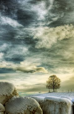 winter tree 6 by riisli, via Flickr