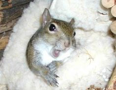 Sugar Bush -- The Super Model Squirrel  ... from PetsLady.com ... The FUN site for Animal Lovers