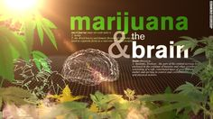 Unlike other drugs that may work well as single compounds, synthesized in a lab, cannabis may offer its most profound benefit as a whole plant, if we let the entourage effect flower, as Mechoulam suggested more than a decade ago.  http://edition.cnn.com/2014/03/11/health/gupta-marijuana-entourage/index.html?sr=sharebar_twitter