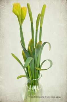 Loving the added texture in this daffodil shot from @Tish of Le Mie Foto!