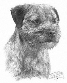 draw a realistic terrier | Border terrier designs available on t-shirts, sweatshirts ...