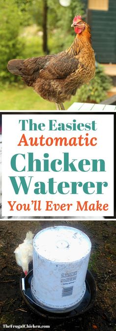 This automatic chicken water can be built in about 5 minutes and for less than $12! Here's FREE plans to make it!