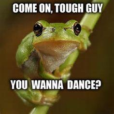 """Результаты поиска изображений по запросу """"Funny Frog"""""""