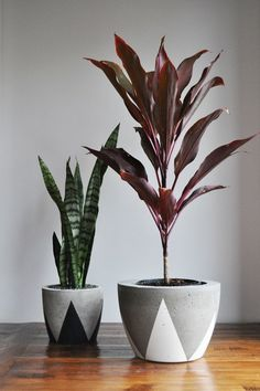 Concrete Planter - Extra Large by fox & ramona