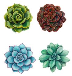 how to draw a succulent - Google Search