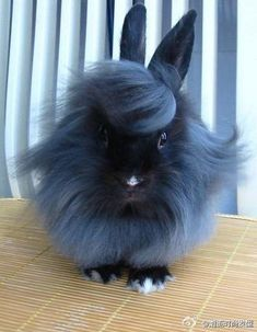 This. Bunny. Is. Fabulous. I want that hair cut.... wait.. hare cut. almost missed a great opprotunity