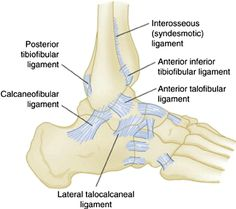 Ankle Joint : Anatomy, Movement & Muscle involvement » How To Relief Lower Leg Muscles, Ankle Joint, Anatomy, Artistic Anatomy