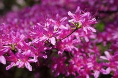Park, Native Flowers, Blooming #park, #nativeflowers, #blooming