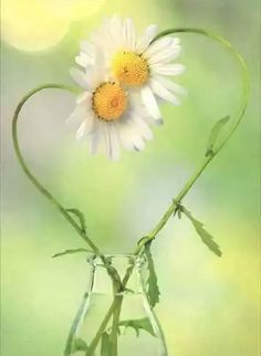 Two Daisies Creating One Heart. A.I I Love Heart, Your Heart, Daisy Love, Daisy Daisy, Love Is All, True Love, Heart In Nature, Daisies, He Loves Me