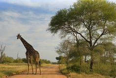 Kruger National Park Kruger National Park, Places Ive Been, South Africa, To Go, Spaces, Mountains, Eyes, Country, Travel