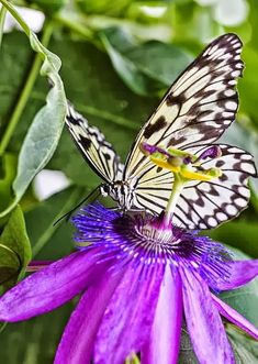 Desktop Backgrounds 4U: Butterflies