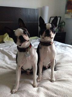 Double Trouble. Deco & Zeus