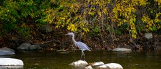 Help the Milwaukee River Greenway Coalition by advocating for the Federal Clean Water Act