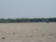 Parque Nacional de Doñana en Almonte, Huelva, Andalucía