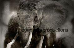 Wildlife - Megapixels Productions