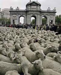 trashumancia por Madrid