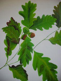 Cuadro hojas de roble - Feng Shui Painting