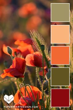 Color Palette: You Can Learn a Lot of Things From the Flowers — Paper Heart Design Color Schemes Colour Palettes, Colour Pallette, Color Palate, Vintage Color Palettes, Decorating Color Schemes, Paint Color Combinations, Color Schemes For Bedrooms, Sunset Color Palette, Wall Color Combination