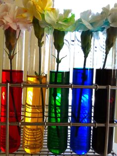 colored flowers science project