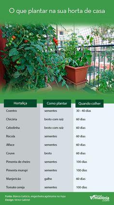 Horta em casa An ideal bedroom. Eco Garden, Home Vegetable Garden, Edible Garden, Garden Plants, Home And Garden, Bonsai Garden, Dream Garden, The Secret Garden, Comment Planter