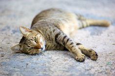 relaxed cat  #cats