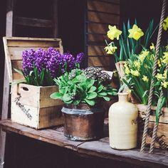 Какие цветы живут у вас дома? У меня вот три кактуса! Высший пилотаж…