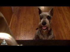 Venison Dog Biscuits recipe | Missouri Department of Conservation