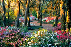 This would be a really beautiful place to #ridecolorfully; in Lake Wales' Bok Tower Gardens.