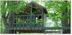 Zelkova tree house plans for two trees | Treehouse Guides