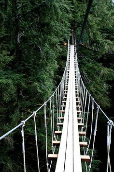 Tree Top Walk in Ketchikan, Alaska - Tree Top Walk in Ketchikan, Alaska I have been here! Got to see a momma bear catching salmon from the roaring creek below for her cub. Tree Top Walk in Ketchikan, Alaska North To Alaska, Visit Alaska, Alaska Usa, Ketchikan Alaska, Alaska Travel, Travel Usa, Alaska Trip, Mexico Canada, Places To Travel