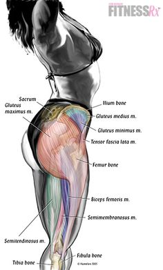 How to Squat with Proper Form: The Definitive Guide