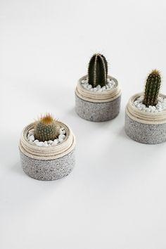 DIY Mini Cactus Plan
