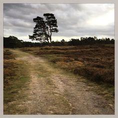 Let's take a deel breath... #nature #heidestein #ig_utrecht #ig_nature Kijk voor meer info op www.heleenklop.nl