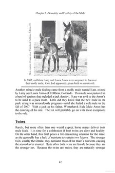 """Blue Moon was the very 1st """"scientifically verified mule colt foaled from a mule molly . . . Krause is a true molly mule with 63 chromosomes and her new son Blue Moon is also a mule with 63 chromosomes. The father and grandfather is a verified jackass with 62 chromosomes, and the grandmother a true female horse with 64 chromosomes. // """" So what do you call the foal of a mule? . . . [T]he cross of a jack and mule could logically be called a jule."""" White Lightning was the 2d jule of such a…"""