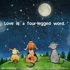 L♥VE My Fritz,Susie,Andy,JimBo,Friday, Machen,Gigi.XXXXXXX Over the Rainbow Bridge