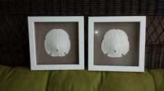 Framed Sand Dollars by SeashorePlace on Etsy 20% pintrest discount with code pinchristmas2015