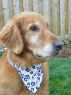 Niagara Rescue Ca Adopt Dog