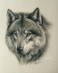 White Wolf : The Mongolian Wolf : Beautiful Subspecies of the Gray Wolf Wolf Painting, Sketch Painting, Animal Sketches, Animal Drawings, Mago Tattoo, Tier Wolf, Ying Y Yang, Wolf Sketch, Drawn Art