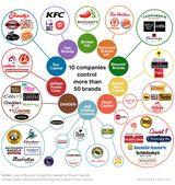Food Chain Web