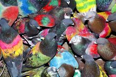 Ricardo Cases captures the eccentric world of Spanish pigeon racers, who hand-paint their birds in neon colours and send them off to woo a female. The champion pigeon is the one that woos most chivalrously Best Photo Books, Photo Exhibit, Neon Painting, 12 November, Wallpaper Magazine, Expositions, Paris Photos, Colorful Birds, Exotic Birds