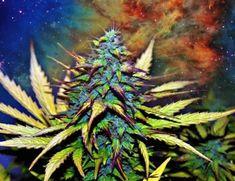 Marihuana Dibujos Chidos images
