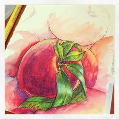 Peach, sketch is done by Faber Castell Pen and Watercolor Pencils in Moleskine Notebook
