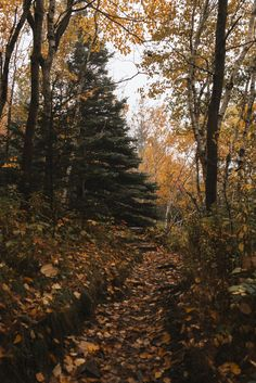 Autumn path in the woods Autumn Nature, All Nature, Autumn Forest, Seasons Of The Year, Best Seasons, Autumn Cozy, Autumn Fall, Autumn Aesthetic, Autumn Photography