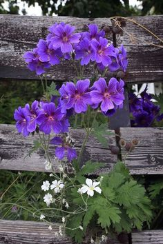 """Wild Ways by Thinking-Silence """"Some vibrant flowers - shot in Norway. Country Fences, Rustic Fence, Purple Flowers, Wild Flowers, Beautiful Flowers, Beautiful Things, Bright Flowers, Summer Flowers, Geranium Vivace"""